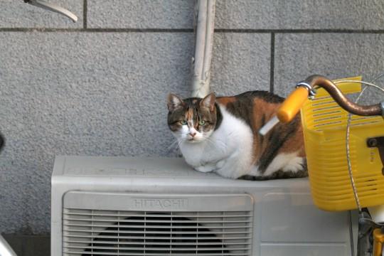 室外機の上にいる猫