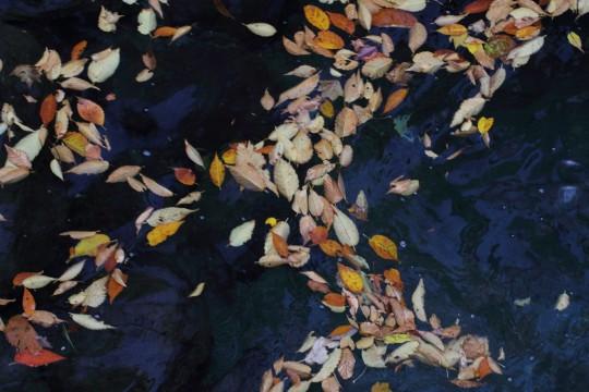 水に浮かぶ落ち葉
