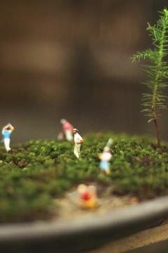 盆栽の上の小さな人たち