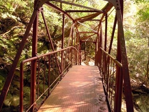森の中のふるびた鉄橋