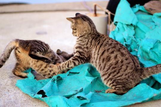 波止場でじゃれあう子猫たち