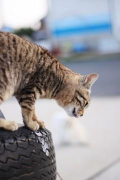 タイヤの上から下をのぞき込む猫