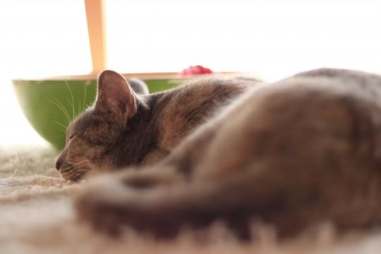 ふんわりした陽光のなかお昼寝する猫