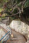 山沿いの坂道を歩く猫