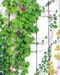 植物に覆われた白い壁面