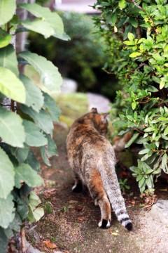 茂みに入り込む猫