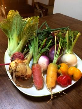 様々な無農薬野菜